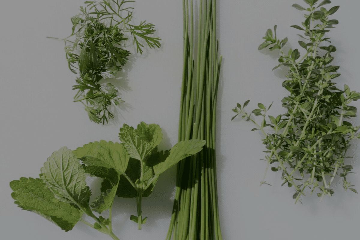 Spices, Herbs & Seasonings
